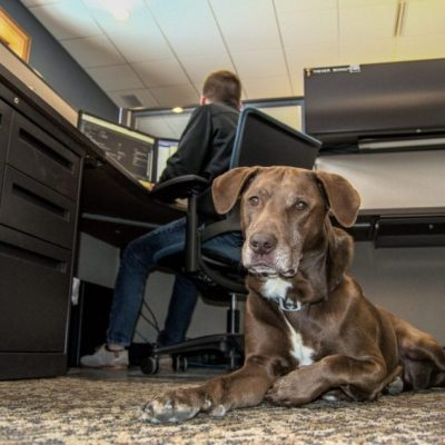 Rocky in Office